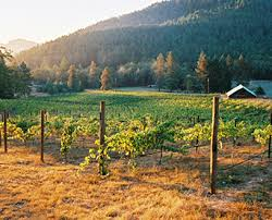Umpqua Valley WInes